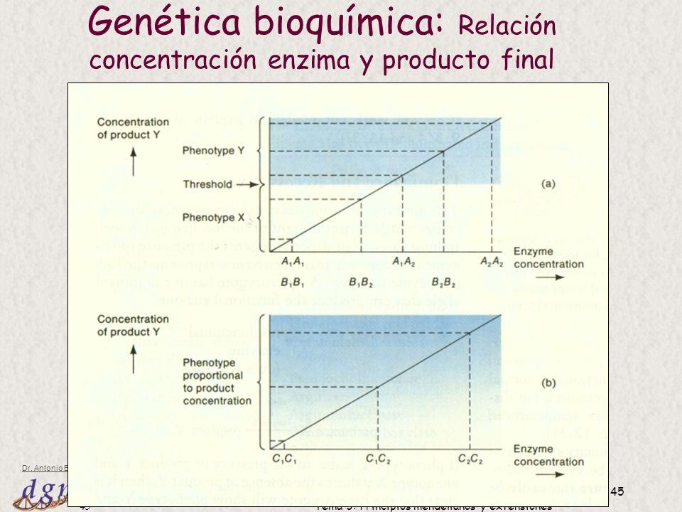 45 Dr. Antonio Barbadilla Tema 3: Principios mendelianos y extensiones 45 Genética bioquímica: Relación concentración enzima y producto final