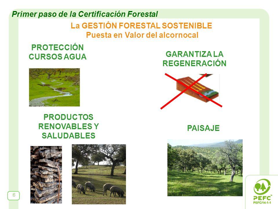 La GESTIÓN FORESTAL SOSTENIBLE Puesta en Valor del alcornocal PROTECCIÓN CURSOS AGUA 6 GARANTIZA LA REGENERACIÓN PAISAJE PRODUCTOS RENOVABLES Y SALUDABLES Primer paso de la Certificación Forestal