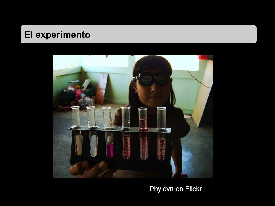 El experimento Phylevn en Flickr