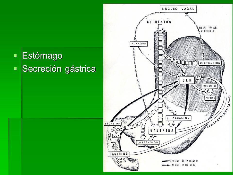 Gastroyeyunostomia Gastroyeyunostomia