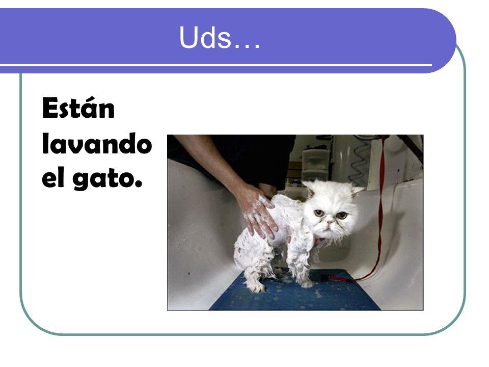 Uds… Están lavando el gato.