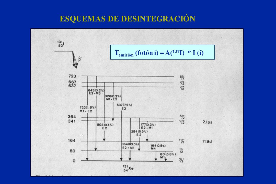 ESQUEMAS DE DESINTEGRACIÓN T emisión (fotón i) = A( 131 I) * I (i)