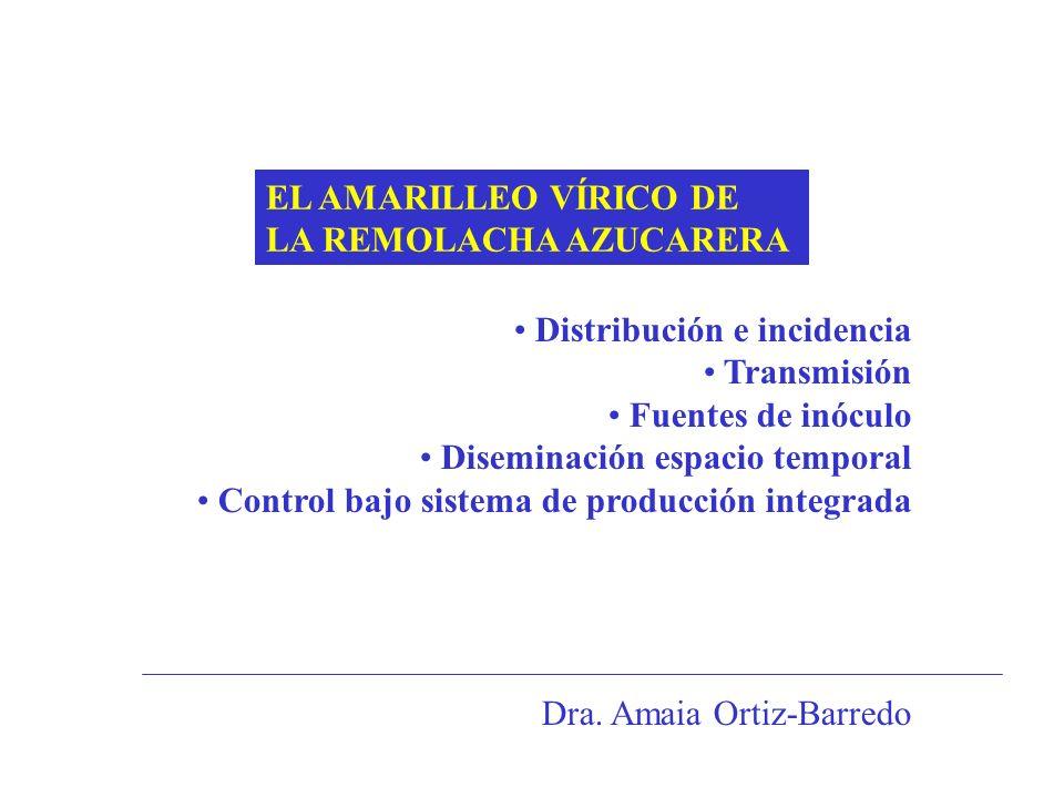 EL AMARILLEO VÍRICO DE LA REMOLACHA AZUCARERA Distribución e incidencia Transmisión Fuentes de inóculo Diseminación espacio temporal Control bajo sist