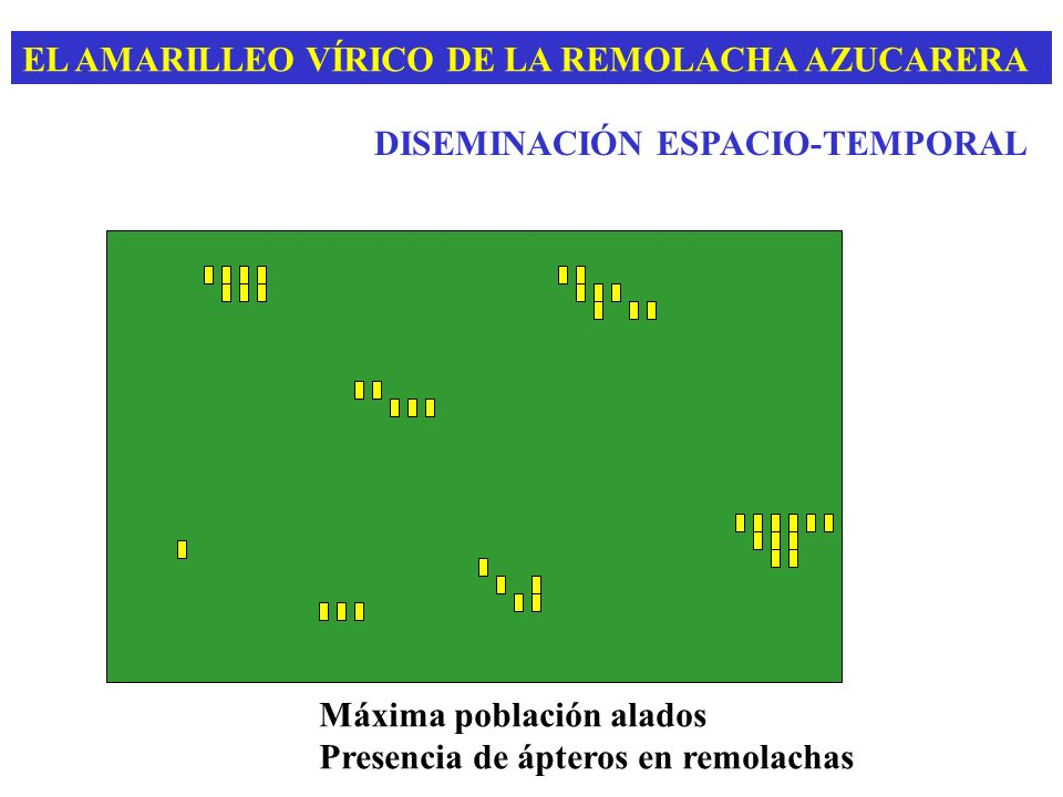 EL AMARILLEO VÍRICO DE LA REMOLACHA AZUCARERA DISEMINACIÓN ESPACIO-TEMPORAL Máxima población alados Presencia de ápteros en remolachas