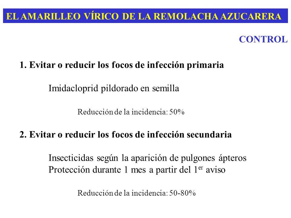 EL AMARILLEO VÍRICO DE LA REMOLACHA AZUCARERA CONTROL 1. Evitar o reducir los focos de infección primaria Imidacloprid pildorado en semilla Reducción