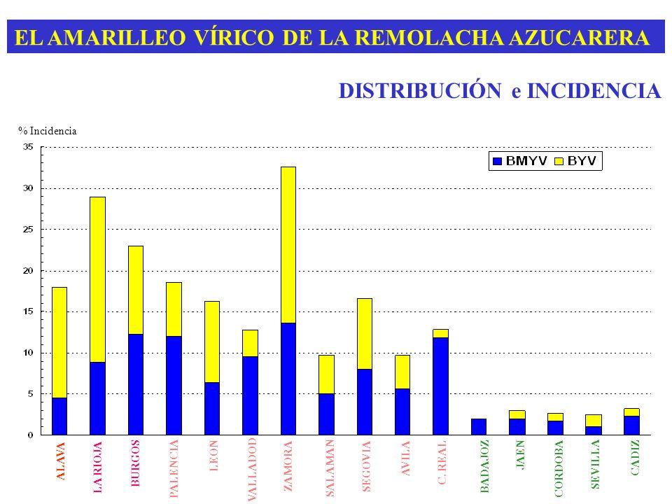 EL AMARILLEO VÍRICO DE LA REMOLACHA AZUCARERA DISTRIBUCIÓN e INCIDENCIA ALAVA LA RIOJA BURGOS PALENCIA LEON VALLADOD ZAMORA SALAMAN SEGOVIA AVILA C. R