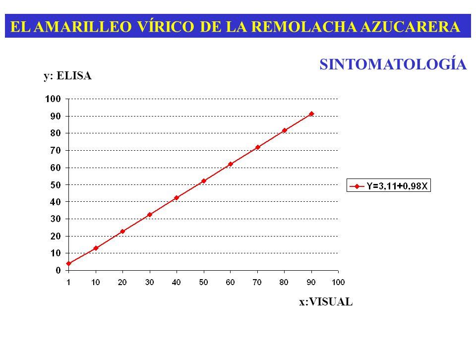 EL AMARILLEO VÍRICO DE LA REMOLACHA AZUCARERA BYV: BEET YELLOW CLOSTEROVIRUS Transmisión semi-persistente Myzus persicae (80%) Aphis fabae (18%) BMYV: BEET MILD YELLOWING VIRUS Transmisión persistente Myzus persicae (80%) Aphis fabae (?) ORIGEN Y TRANSMISIÓN