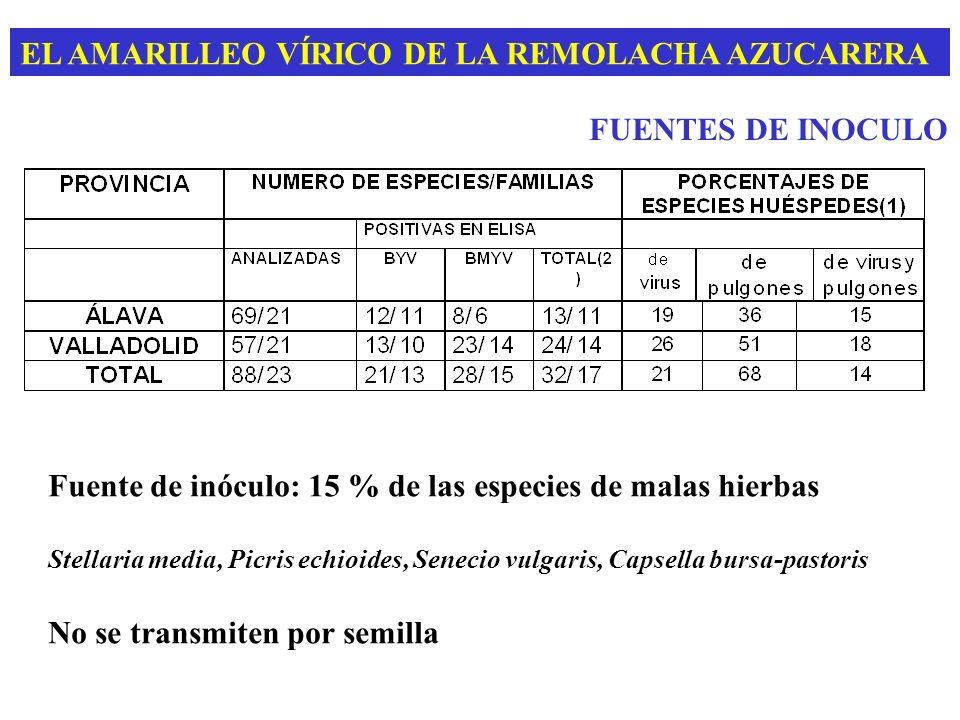 EL AMARILLEO VÍRICO DE LA REMOLACHA AZUCARERA FUENTES DE INOCULO Fuente de inóculo: 15 % de las especies de malas hierbas Stellaria media, Picris echi