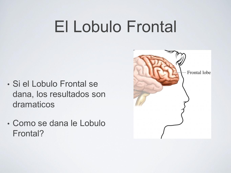 El Lobulo Frontal Si el Lobulo Frontal se dana, los resultados son dramaticos Como se dana le Lobulo Frontal?