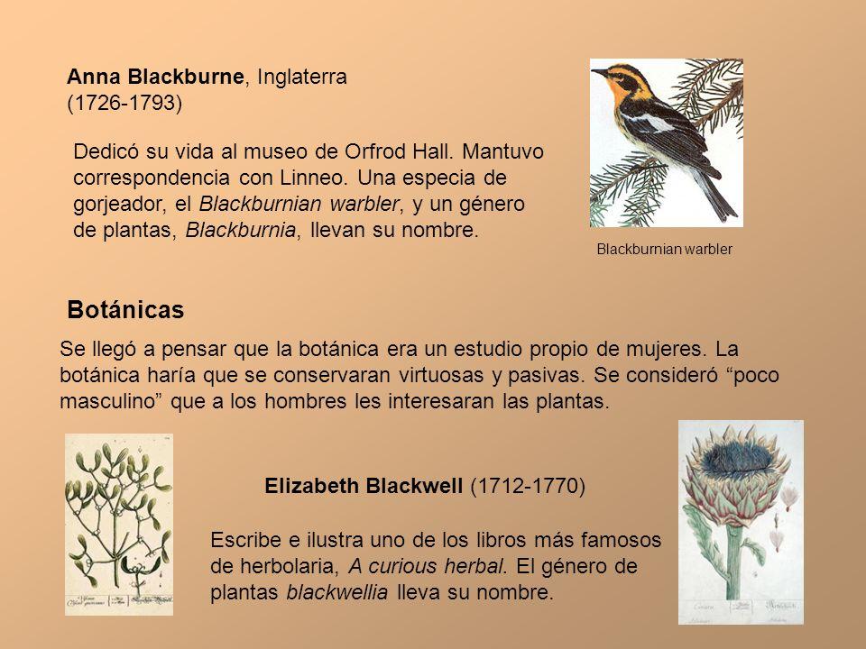 Anna Blackburne, Inglaterra (1726-1793) Dedicó su vida al museo de Orfrod Hall. Mantuvo correspondencia con Linneo. Una especia de gorjeador, el Black