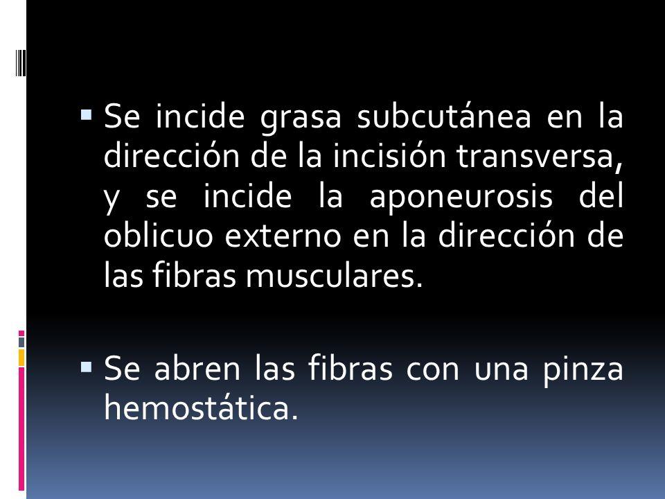 Se incide grasa subcutánea en la dirección de la incisión transversa, y se incide la aponeurosis del oblicuo externo en la dirección de las fibras mus