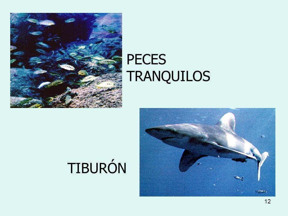 12 PECES TRANQUILOS TIBURÓN