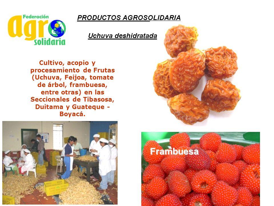 Cultivo, acopio y procesamiento de Frutas (Uchuva, Feijoa, tomate de árbol, frambuesa, entre otras) en las Seccionales de Tibasosa, Duitama y Guateque