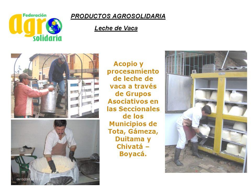 Leche de Vaca Acopio y procesamiento de leche de vaca a través de Grupos Asociativos en las Seccionales de los Municipios de Tota, Gámeza, Duitama y C