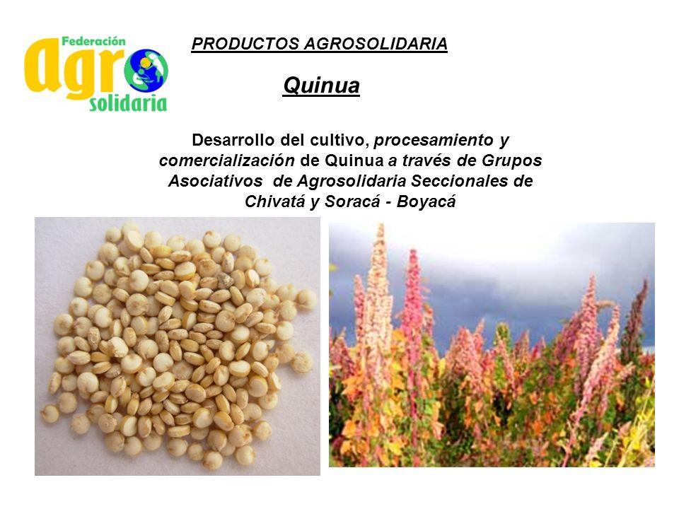 Quinua Desarrollo del cultivo, procesamiento y comercialización de Quinua a través de Grupos Asociativos de Agrosolidaria Seccionales de Chivatá y Sor