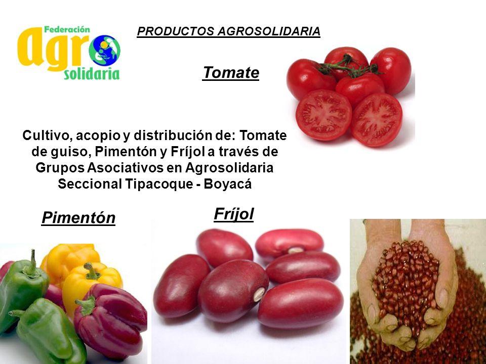 Cultivo, acopio y distribución de: Tomate de guiso, Pimentón y Fríjol a través de Grupos Asociativos en Agrosolidaria Seccional Tipacoque - Boyacá Tom