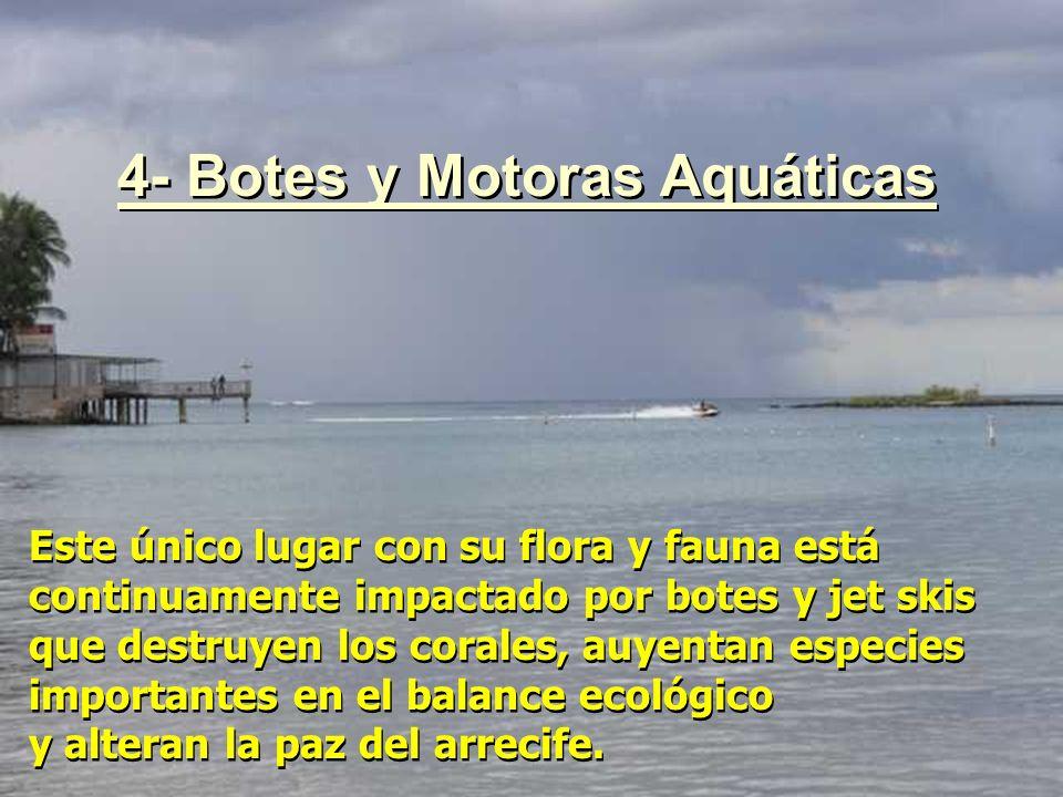 Este único lugar con su flora y fauna está continuamente impactado por botes y jet skis que destruyen los corales, auyentan especies importantes en el
