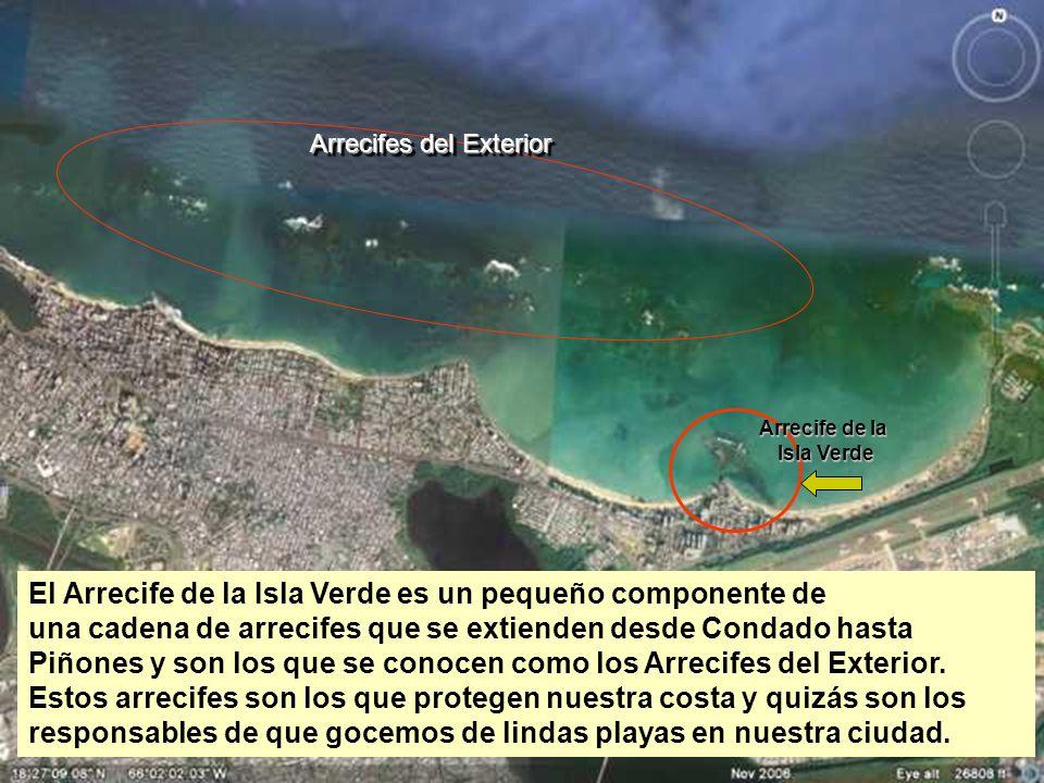 Arrecife de la Isla Verde Arrecifes del Exterior El Arrecife de la Isla Verde es un pequeño componente de una cadena de arrecifes que se extienden des