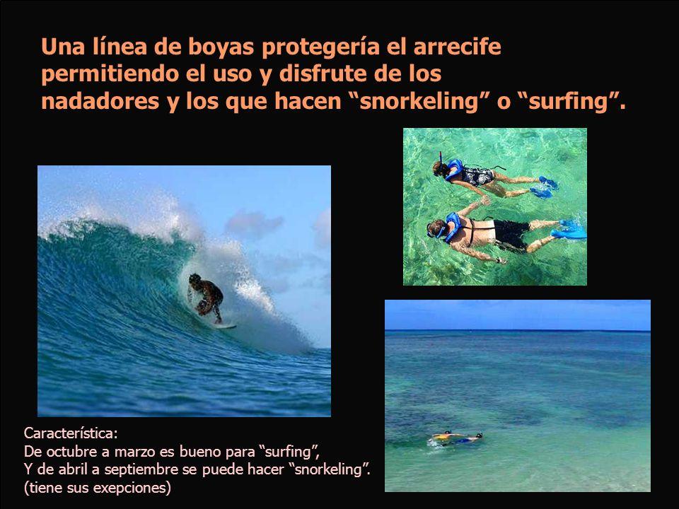Una línea de boyas protegería el arrecife permitiendo el uso y disfrute de los nadadores y los que hacen snorkeling o surfing. Característica: De octu