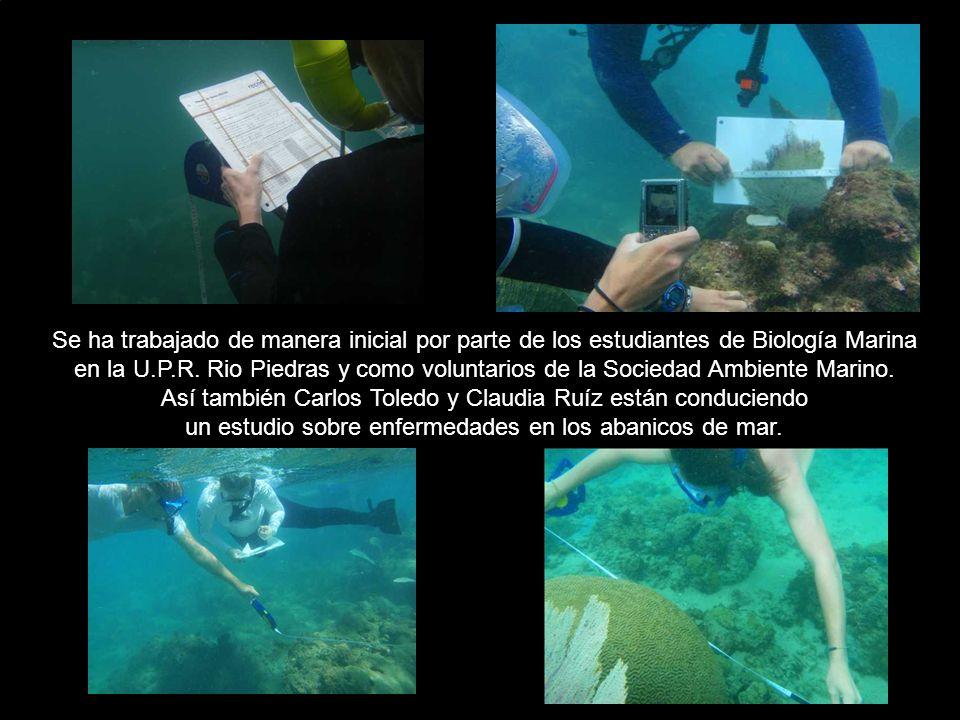 Se ha trabajado de manera inicial por parte de los estudiantes de Biología Marina en la U.P.R. Rio Piedras y como voluntarios de la Sociedad Ambiente