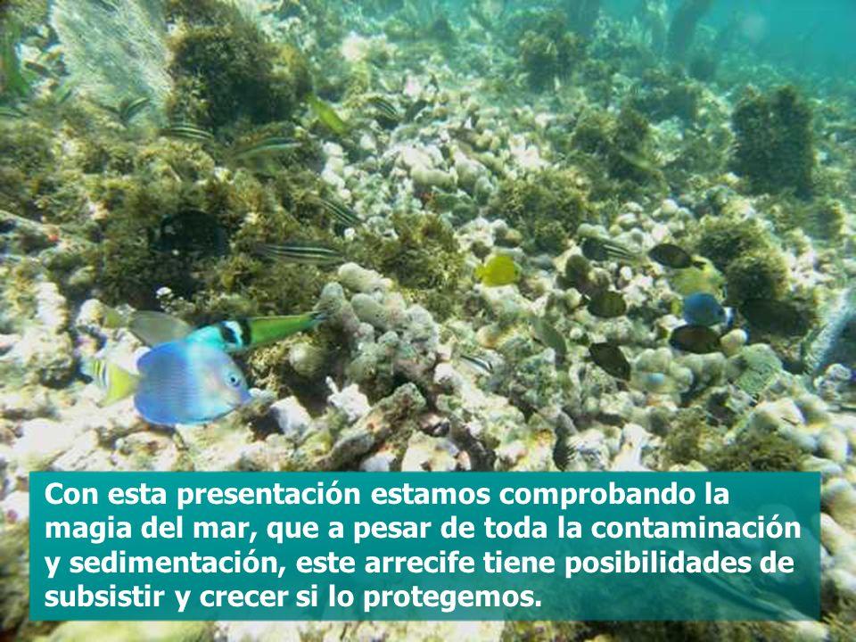 Con esta presentación estamos comprobando la magia del mar, que a pesar de toda la contaminación y sedimentación, este arrecife tiene posibilidades de