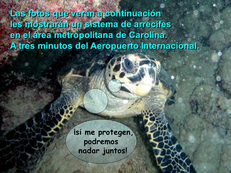 Las fotos que verán a continuación les mostrarán un sistema de arrecifes en el área metropolitana de Carolina. A tres minutos del Aeropuerto Internaci
