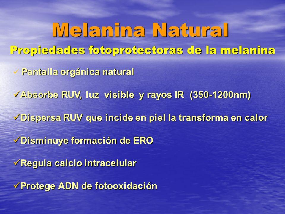 Propiedades fotoprotectoras de la melanina Pantalla orgánica natural Absorbe RUV, luz visible y rayos IR (350-1200nm) Absorbe RUV, luz visible y rayos