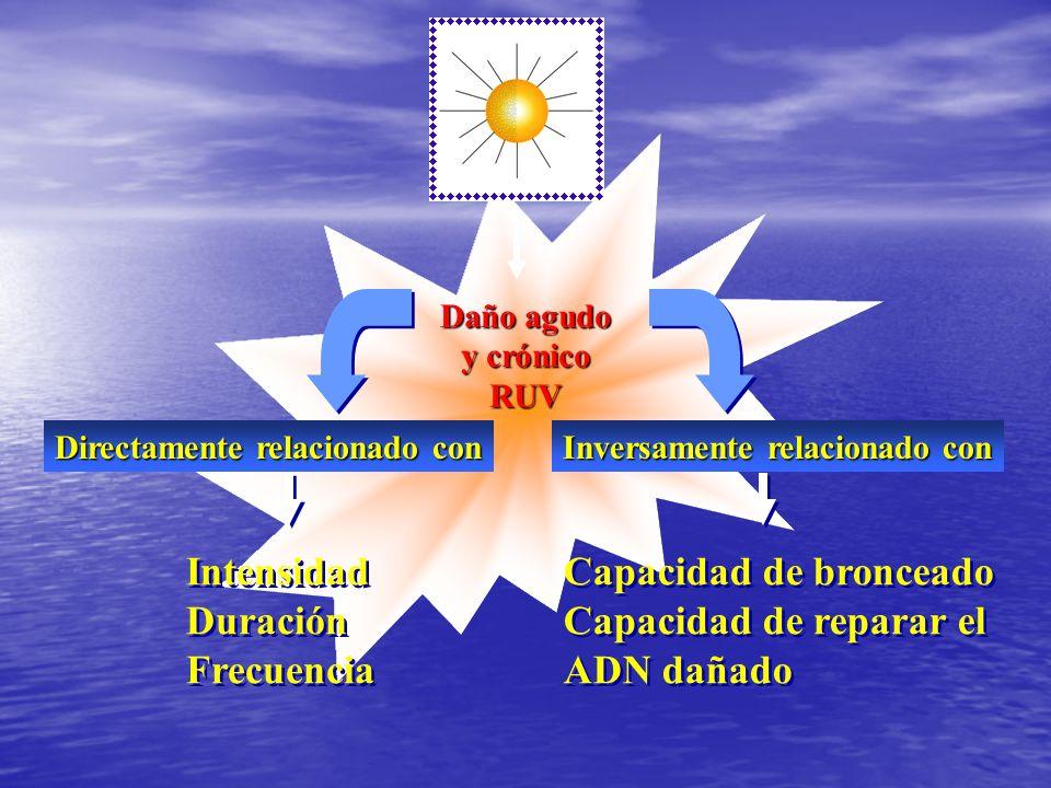 Daño agudo y crónico RUV Intensidad Duración Frecuencia Intensidad Duración Frecuencia Capacidad de bronceado Capacidad de reparar el ADN dañado Capac