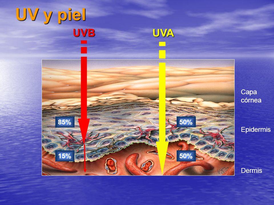 Epidermis Capa córnea Dermis UV y piel UVB 85% 15%UVA 50%