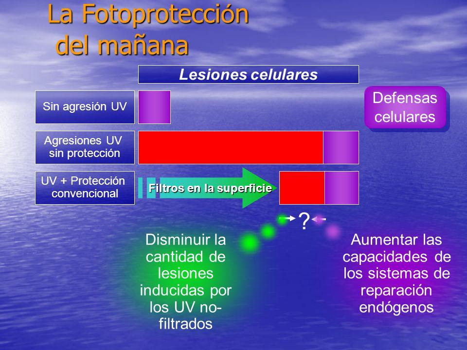 Agresiones UV sin protección UV + Protección convencional Lesiones celulares Filtros en la superficie La Fotoprotecci ó n del mañana Defensas celulare