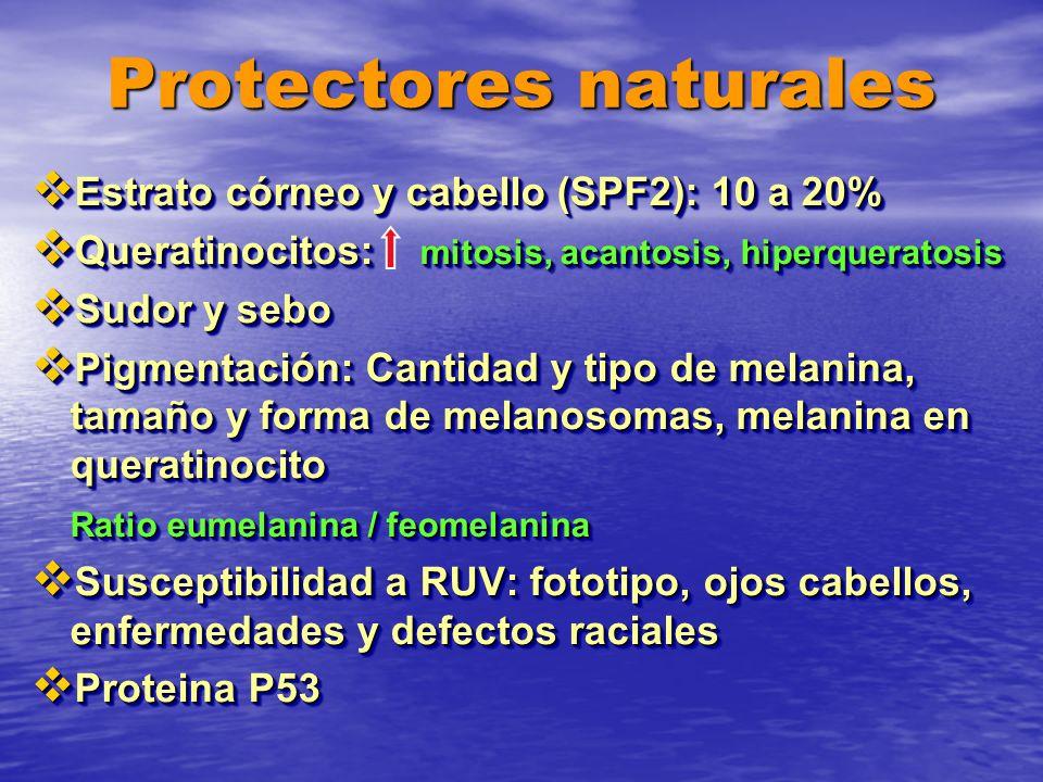 Protectores naturales Estrato córneo y cabello (SPF2): 10 a 20% Estrato córneo y cabello (SPF2): 10 a 20% Queratinocitos: mitosis, acantosis, hiperque