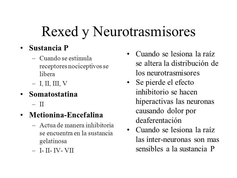 Rexed y Neurotrasmisores Sustancia P –Cuando se estimula receptores nociceptivos se libera –I, II, III, V Somatostatina –II Metionina-Encefalina –Actu