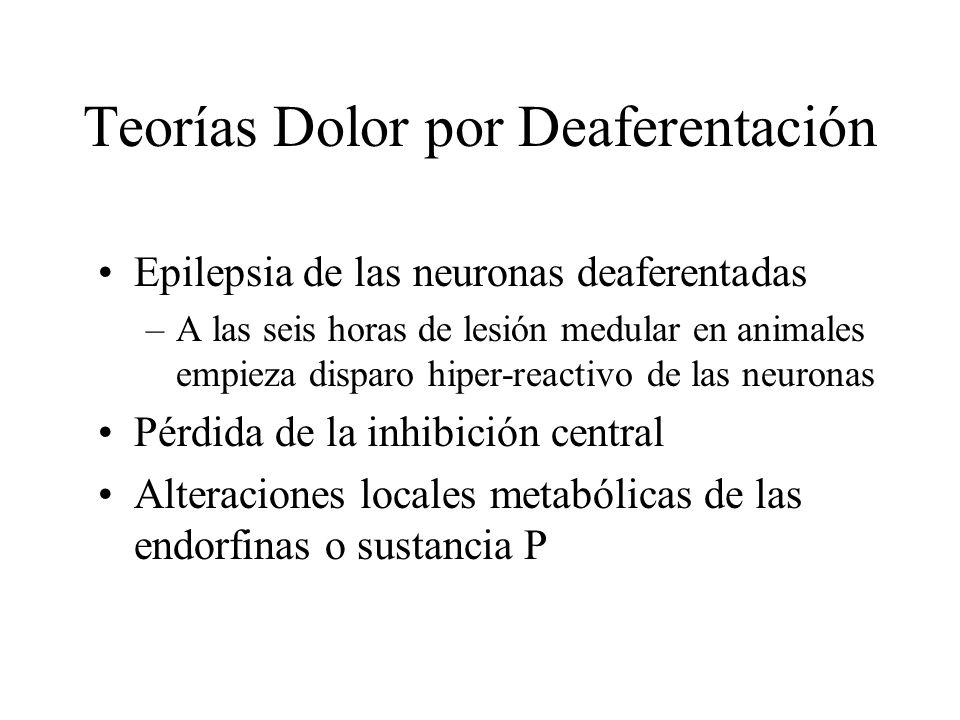Teorías Dolor por Deaferentación Epilepsia de las neuronas deaferentadas –A las seis horas de lesión medular en animales empieza disparo hiper-reactiv