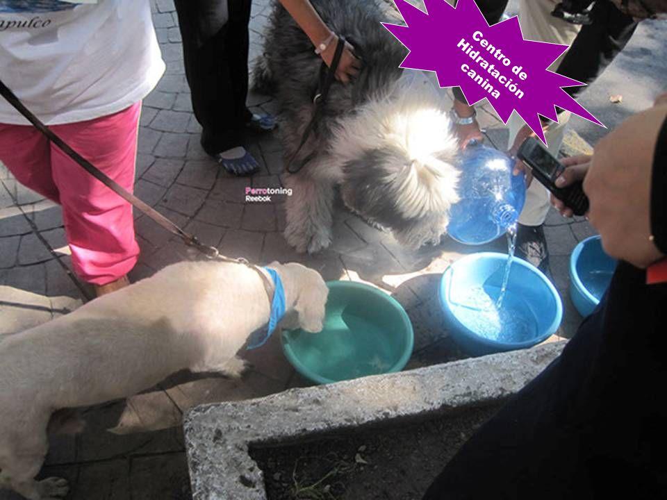 Centro de Hidratación canina
