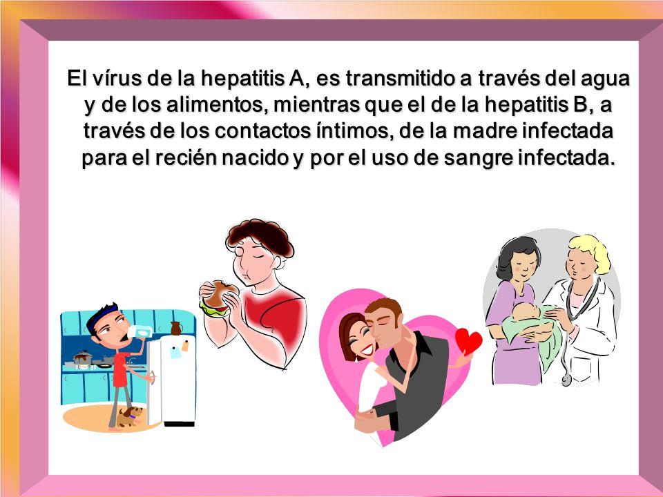 El virus de la hepatitis C, es transmitido por la transfusión de sangre y hemodiálisis, por el uso de drogas intravenosas, material cortante o perfora