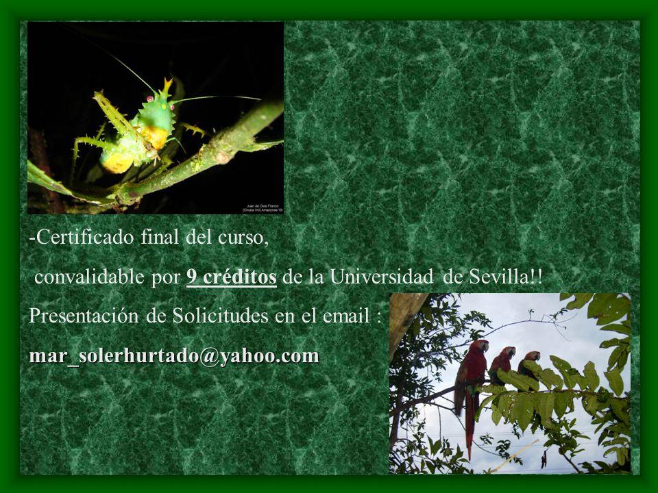 -Certificado final del curso, convalidable por 9 créditos de la Universidad de Sevilla!! Presentación de Solicitudes en el email :mar_solerhurtado@yah