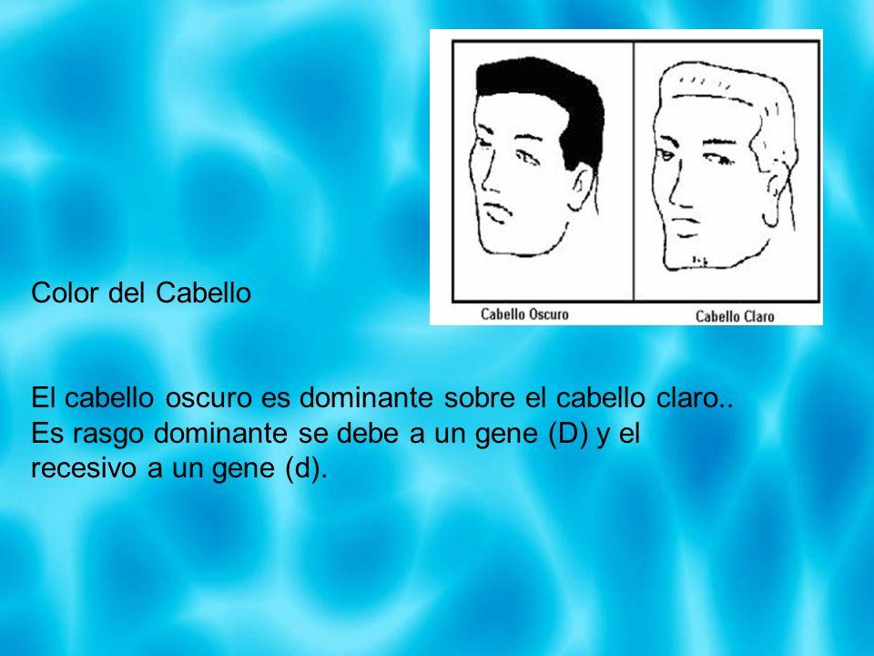 Color del Cabello El cabello oscuro es dominante sobre el cabello claro.. Es rasgo dominante se debe a un gene (D) y el recesivo a un gene (d).
