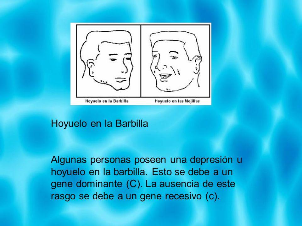 Hoyuelo en la Barbilla Algunas personas poseen una depresión u hoyuelo en la barbilla. Esto se debe a un gene dominante (C). La ausencia de este rasgo
