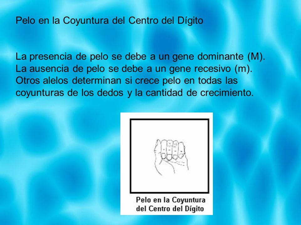 Pelo en la Coyuntura del Centro del Dígito La presencia de pelo se debe a un gene dominante (M). La ausencia de pelo se debe a un gene recesivo (m). O