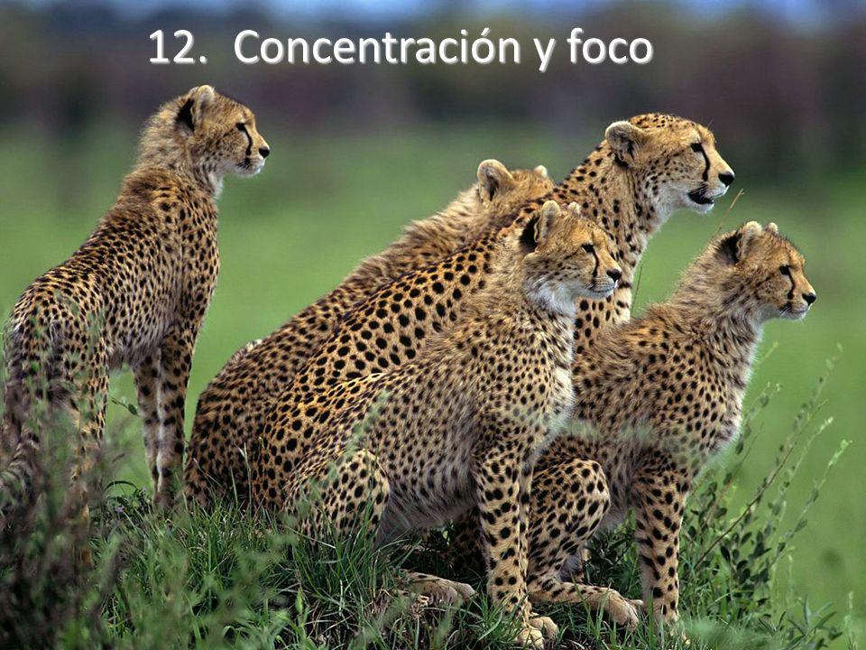 12.Concentración y foco