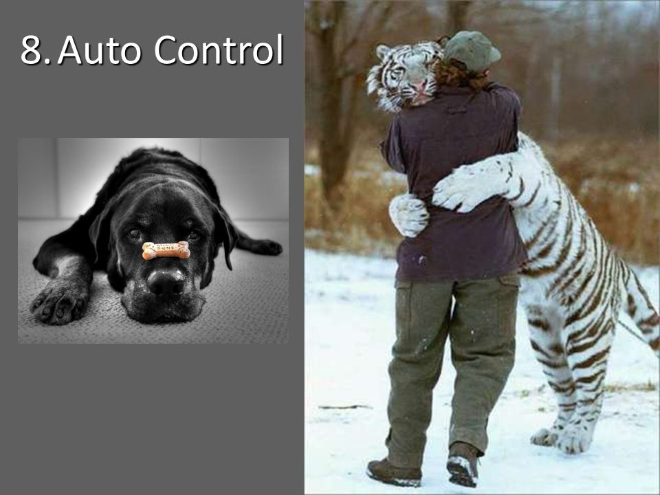 8.Auto Control