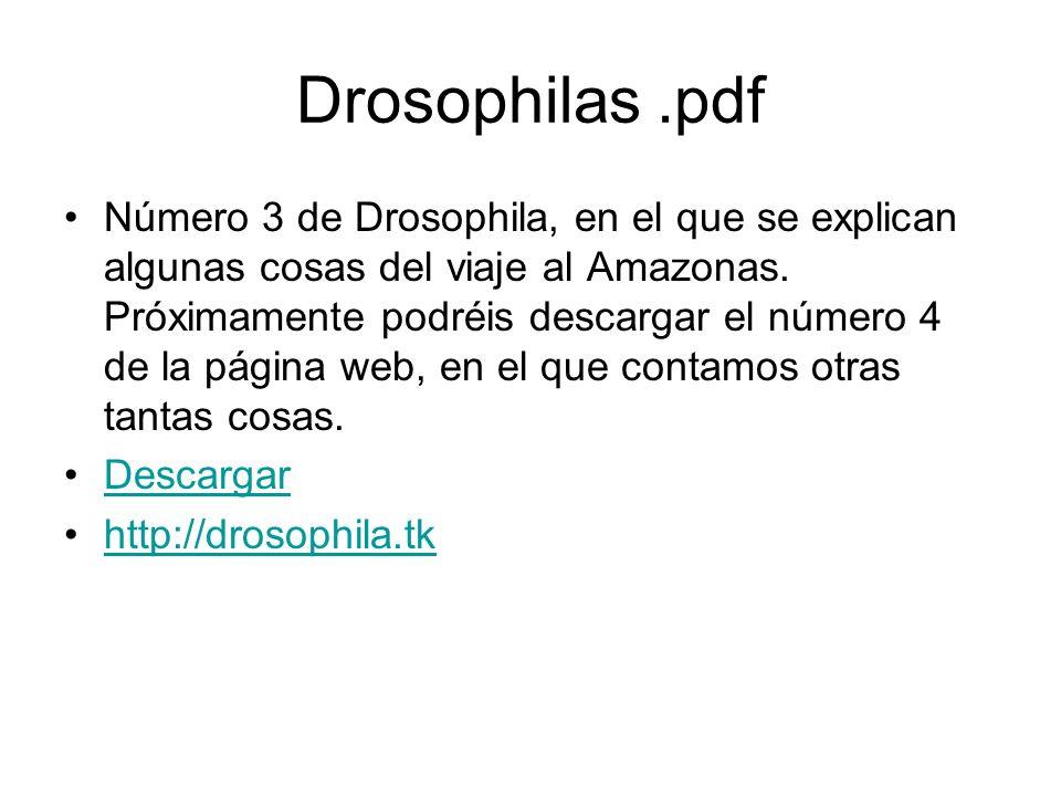 Drosophilas.pdf Número 3 de Drosophila, en el que se explican algunas cosas del viaje al Amazonas. Próximamente podréis descargar el número 4 de la pá