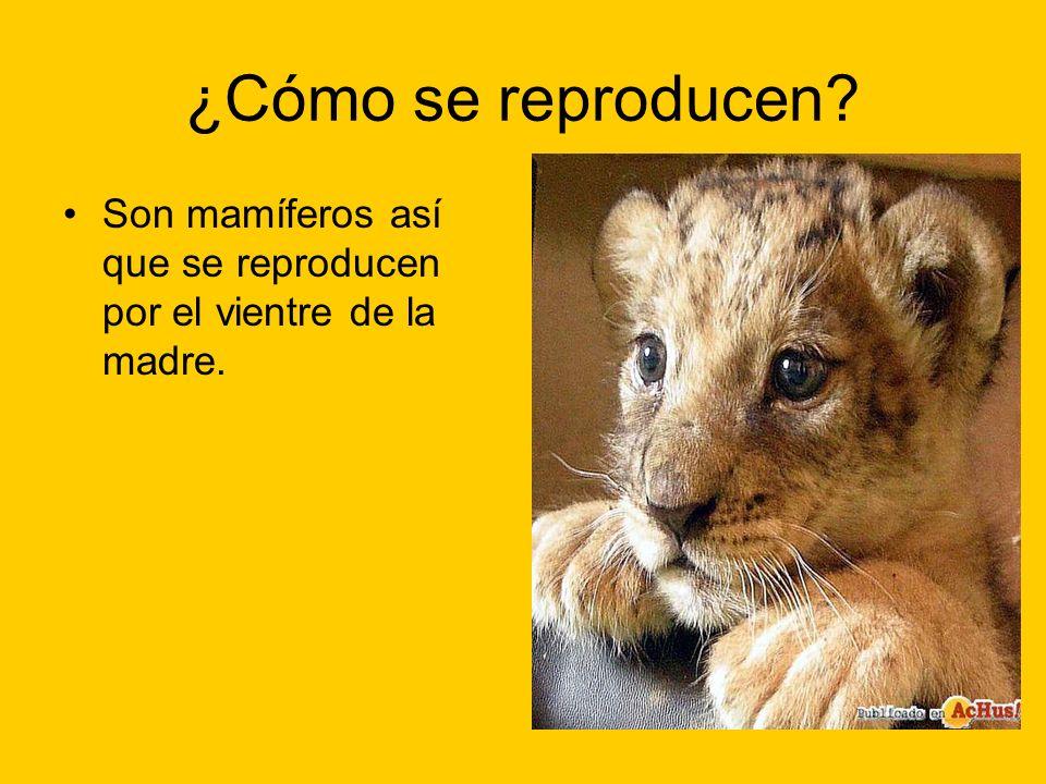 ¿Cómo se reproducen? Son mamíferos así que se reproducen por el vientre de la madre.