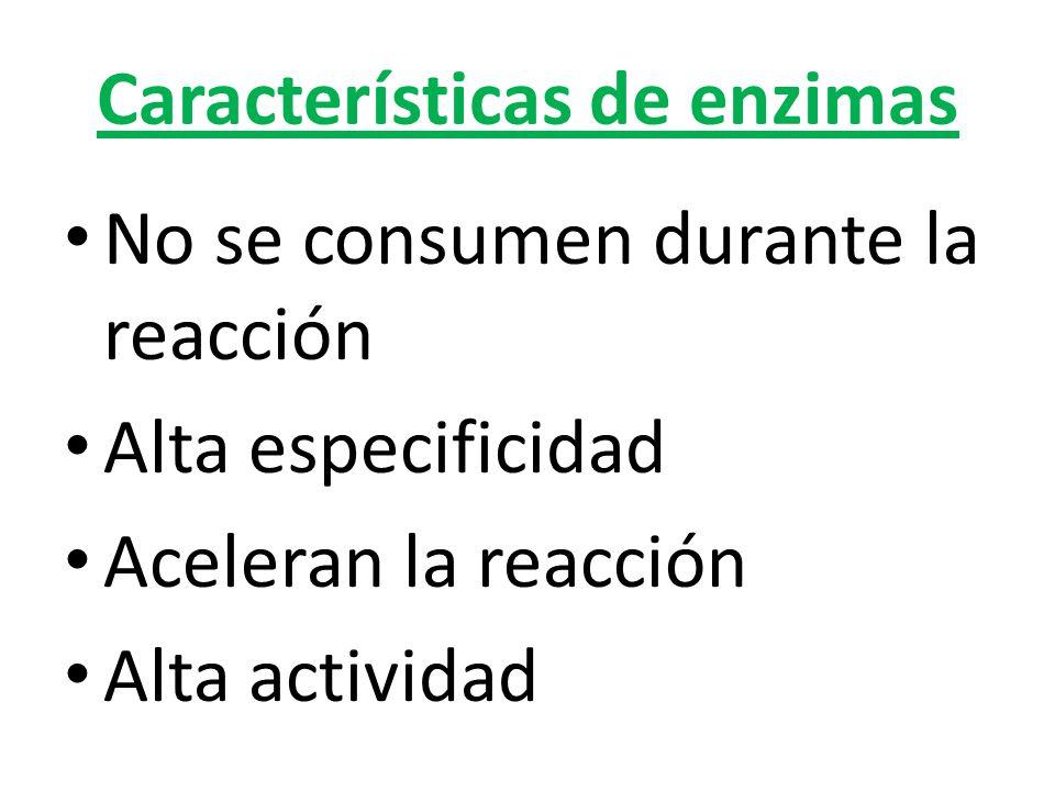 Características de enzimas No se consumen durante la reacción Alta especificidad Aceleran la reacción Alta actividad
