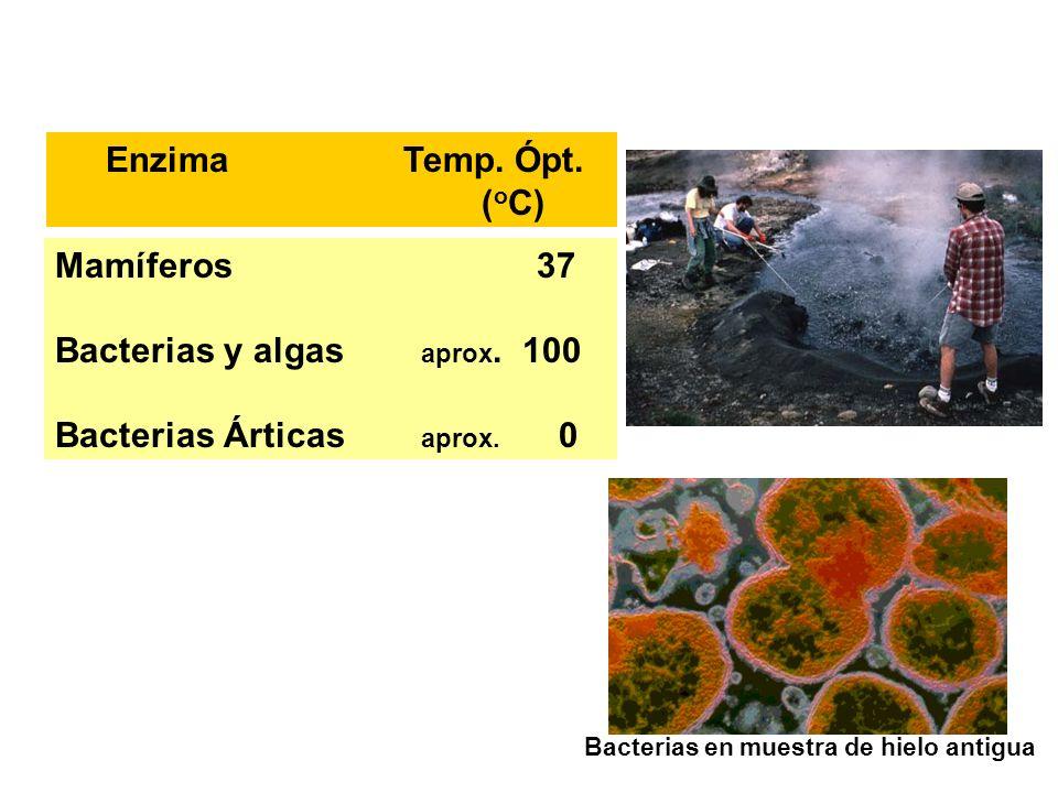 Mamíferos 37 Bacterias y algas aprox. 100 Bacterias Árticas aprox. 0 Enzima Temp. Ópt. ( o C) Bacterias en muestra de hielo antigua