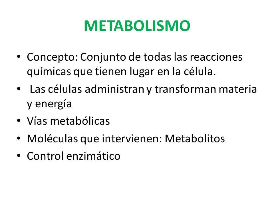 METABOLISMO Concepto: Conjunto de todas las reacciones químicas que tienen lugar en la célula. Las células administran y transforman materia y energía