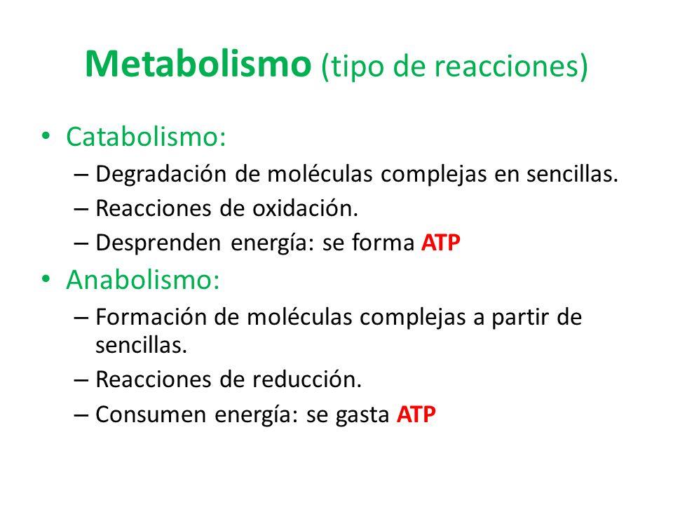 Metabolismo (tipo de reacciones) Catabolismo: – Degradación de moléculas complejas en sencillas. – Reacciones de oxidación. – Desprenden energía: se f