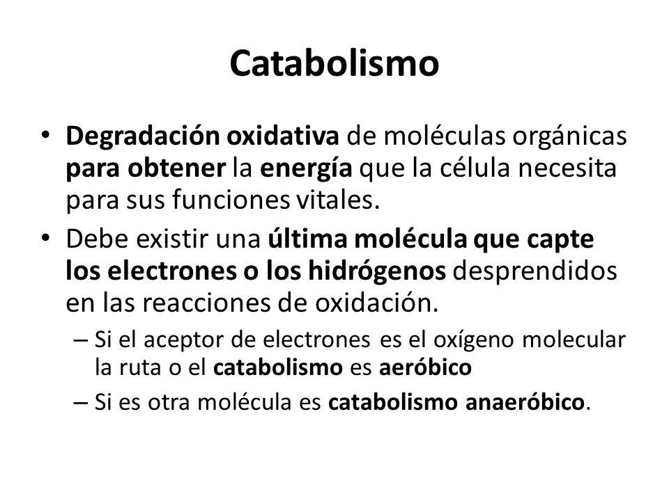 Catabolismo Degradación oxidativa de moléculas orgánicas para obtener la energía que la célula necesita para sus funciones vitales. Debe existir una ú