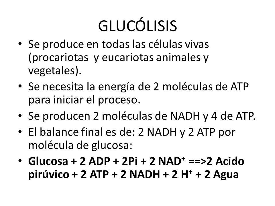 GLUCÓLISIS Se produce en todas las células vivas (procariotas y eucariotas animales y vegetales). Se necesita la energía de 2 moléculas de ATP para in