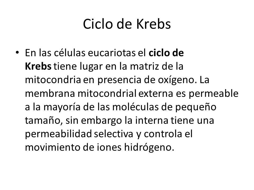 Ciclo de Krebs En las células eucariotas el ciclo de Krebs tiene lugar en la matriz de la mitocondria en presencia de oxígeno. La membrana mitocondria